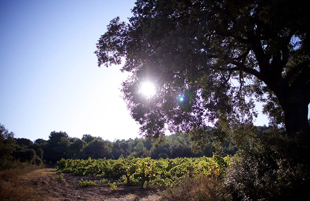 Le Terroir - Domaine Ricardelle